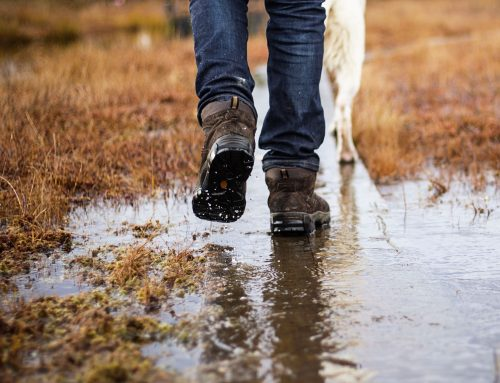 Wet Winter Makes Conditions Ideal For Alabama Rot!